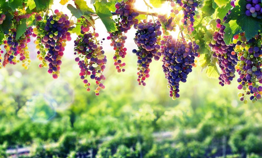 Gestionale aziende vino